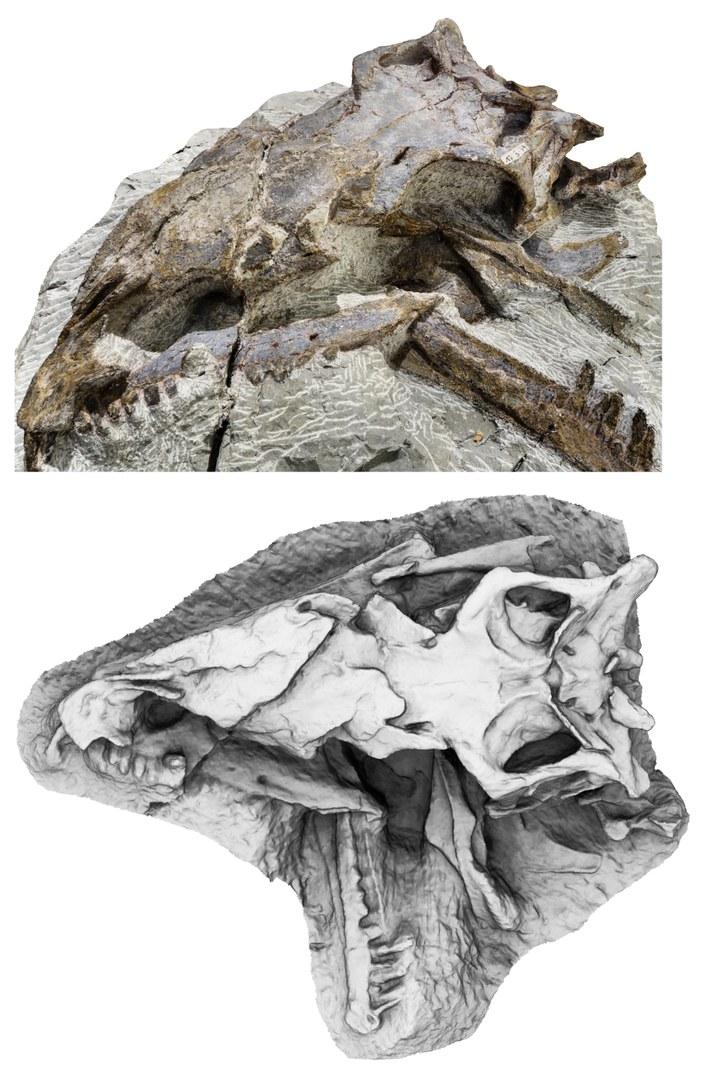 Foto (oben) und 3D-Modell (unten, Draufsicht)