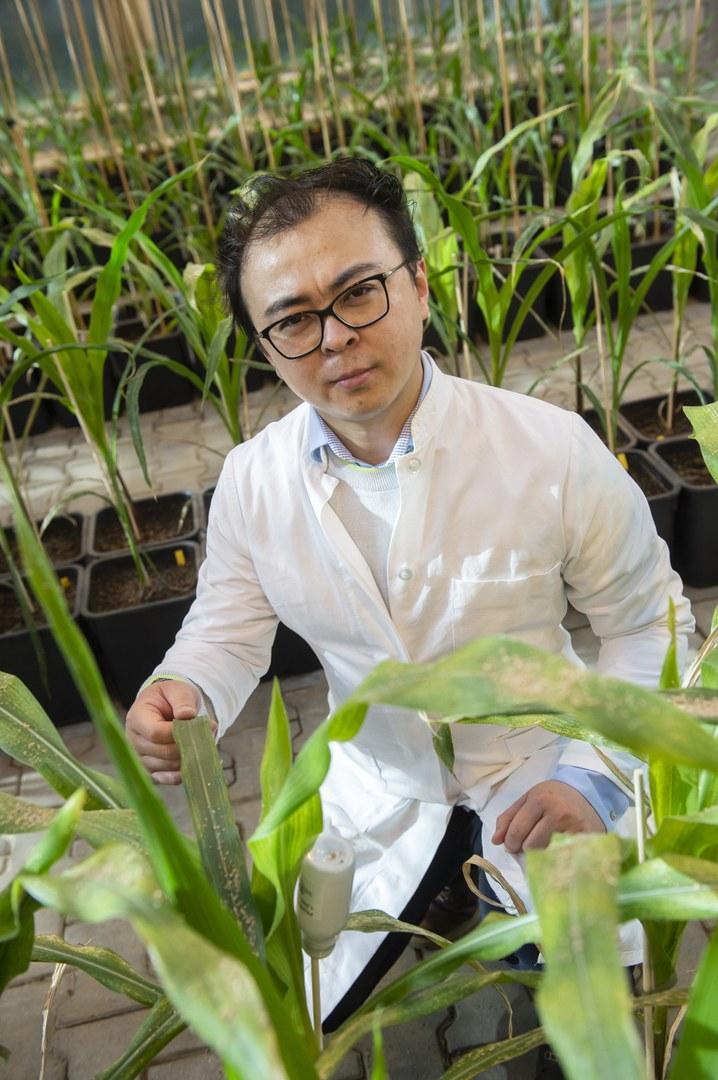 Inmitten von jungen Maispflanzen: