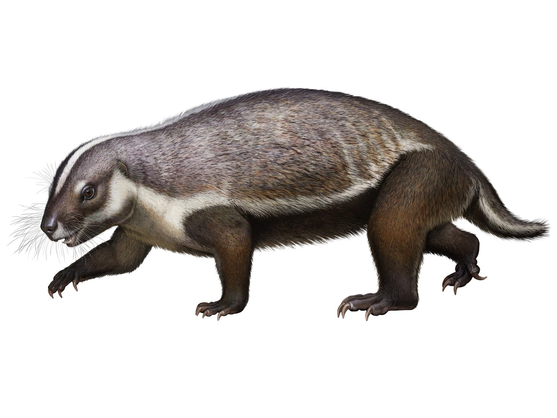 Rekonstruktion des Säugetiers Adalatherium hui,