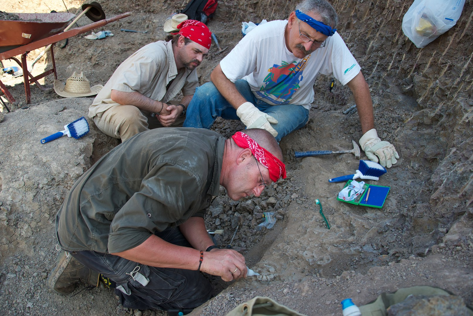 Ausgrabung von Knochen von Dimetrodon und Edaphosaurus