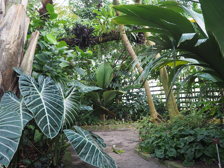 Im Regenwaldhaus