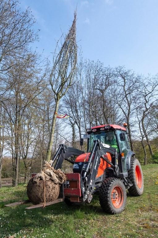 Ein Baum wird zu seinem neuen Standort transportiert. Foto: Barbara Frommann/Uni Bonn