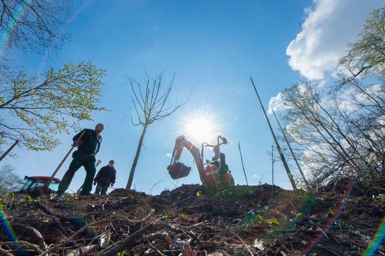 Mitarbeiter der Grünpflege pflanzen neuen Bäume auf dem Hochschulsportgelände. Foto: Barbara Frommann/Uni Bonn