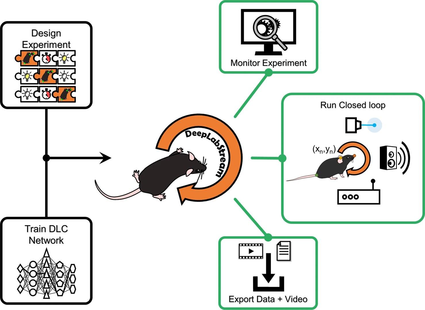 Visuelle Darstellung des Arbeitsablaufs in DLStream.