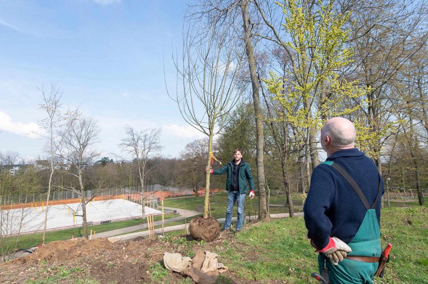 60 neue Bäume gepflanzt