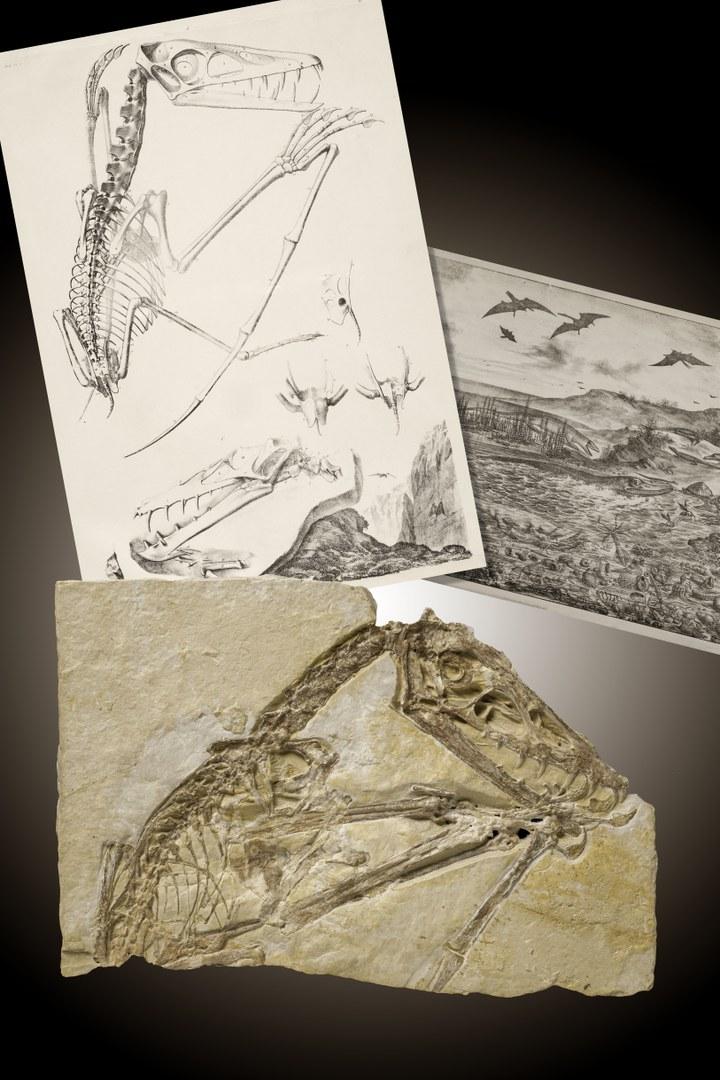Fossil des Jahres