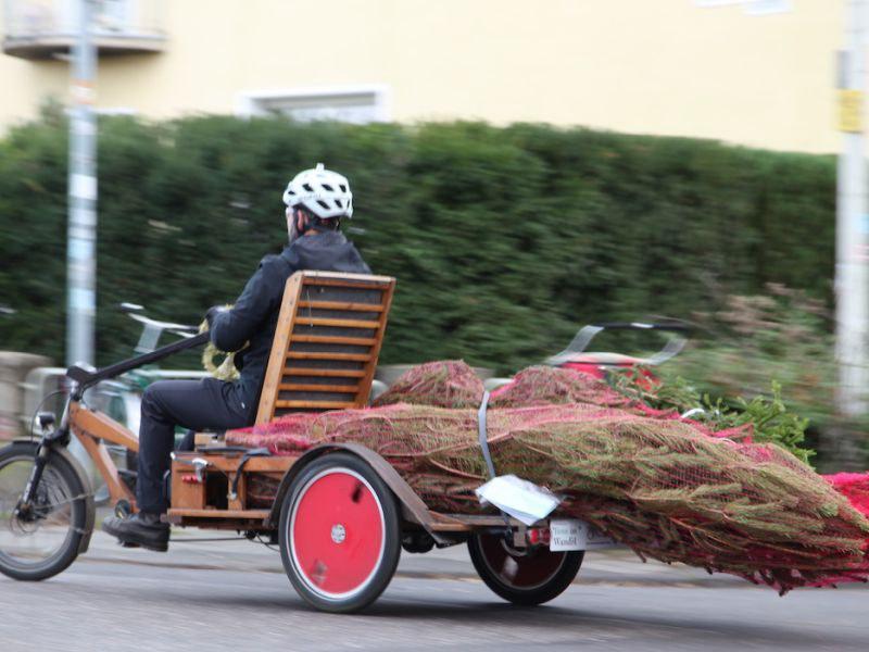 Weihnachtsbaum-Transport mit dem Lastenrad