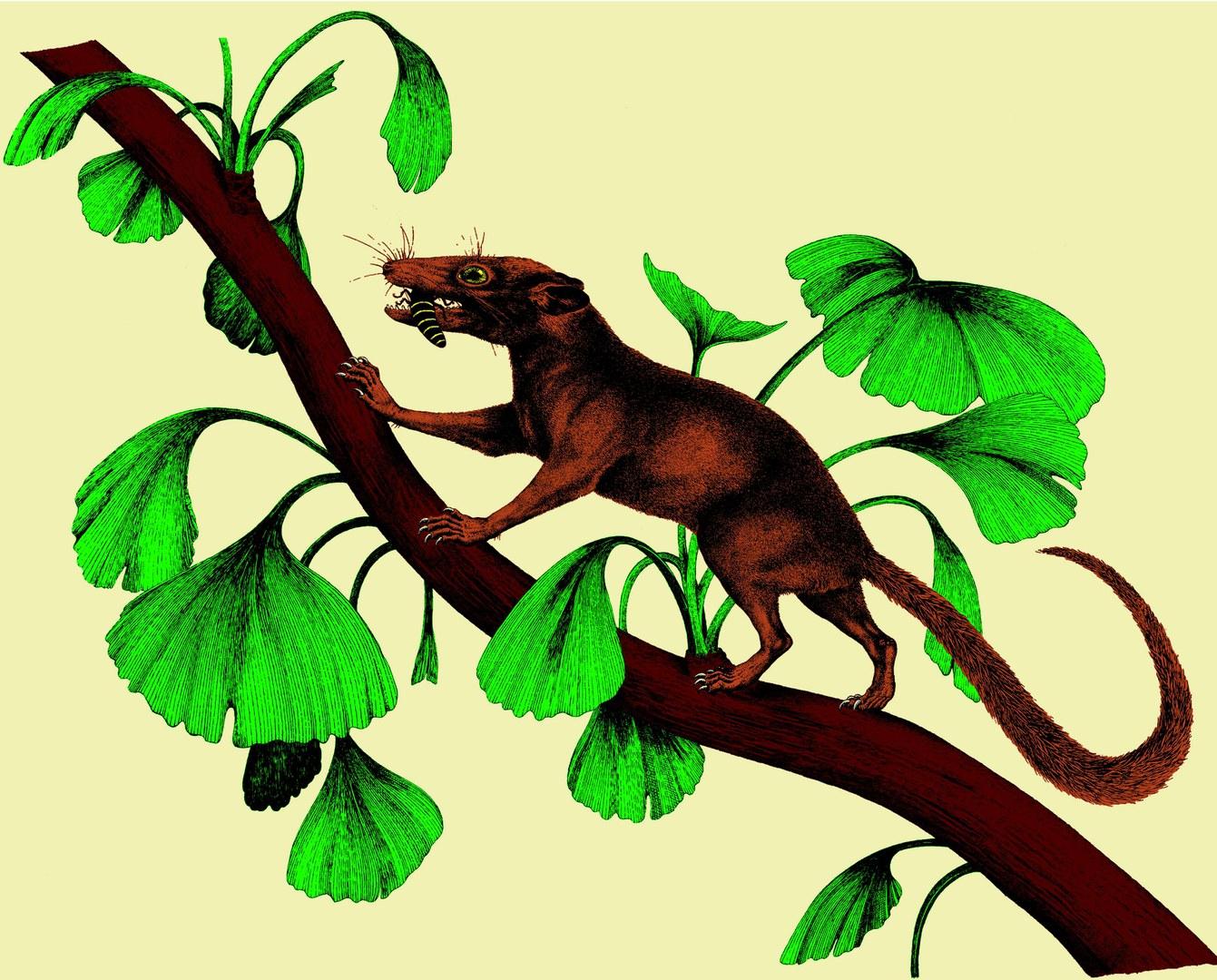 Bild Daumengroßes Ursäugetier als Fossil des Monats