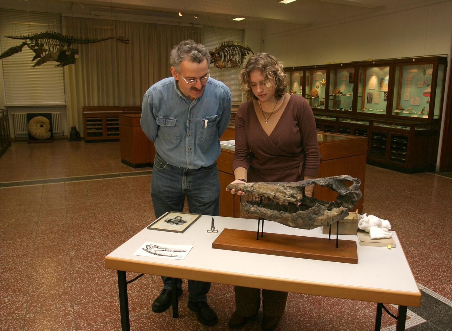 Bild Dinoschädel nach 170 Jahren wieder vollständig