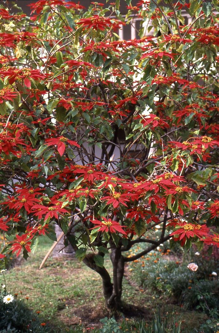 Bild Farbenpracht in der dunklen Jahreszeit