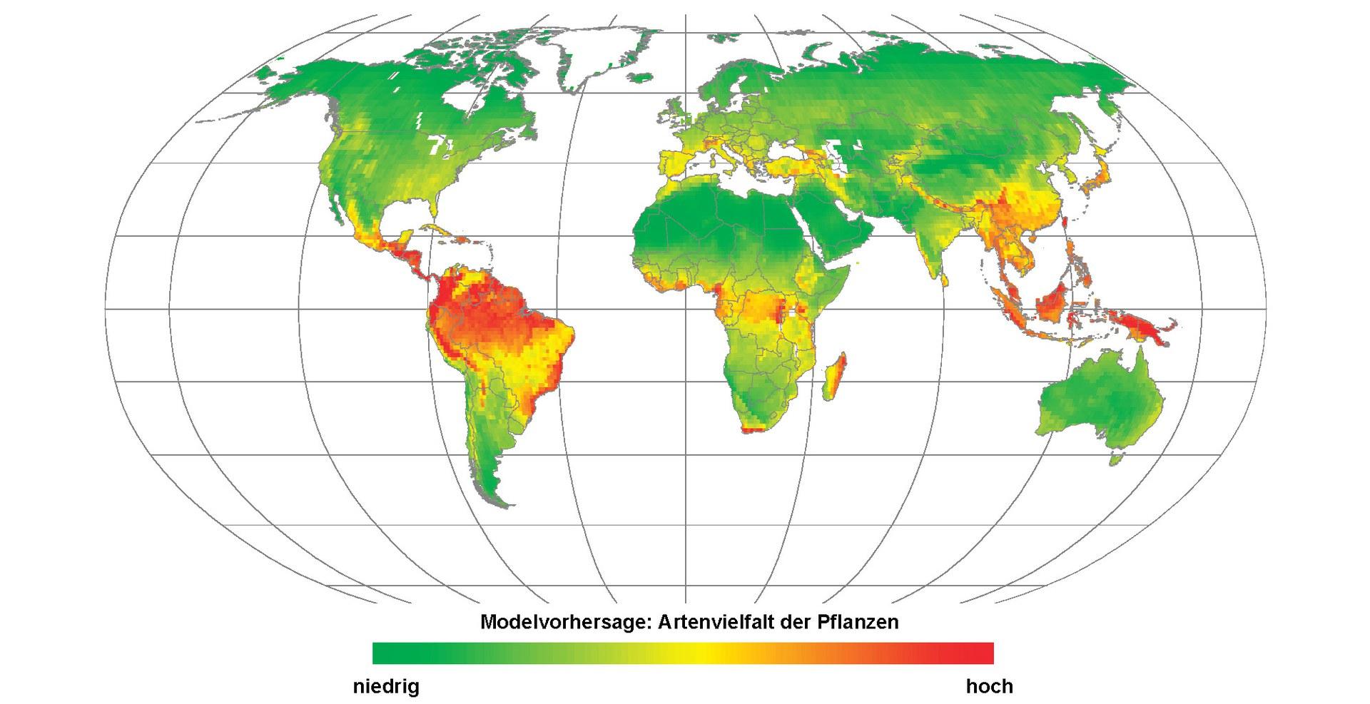 Bild Klima steuert globale Artenvielfalt