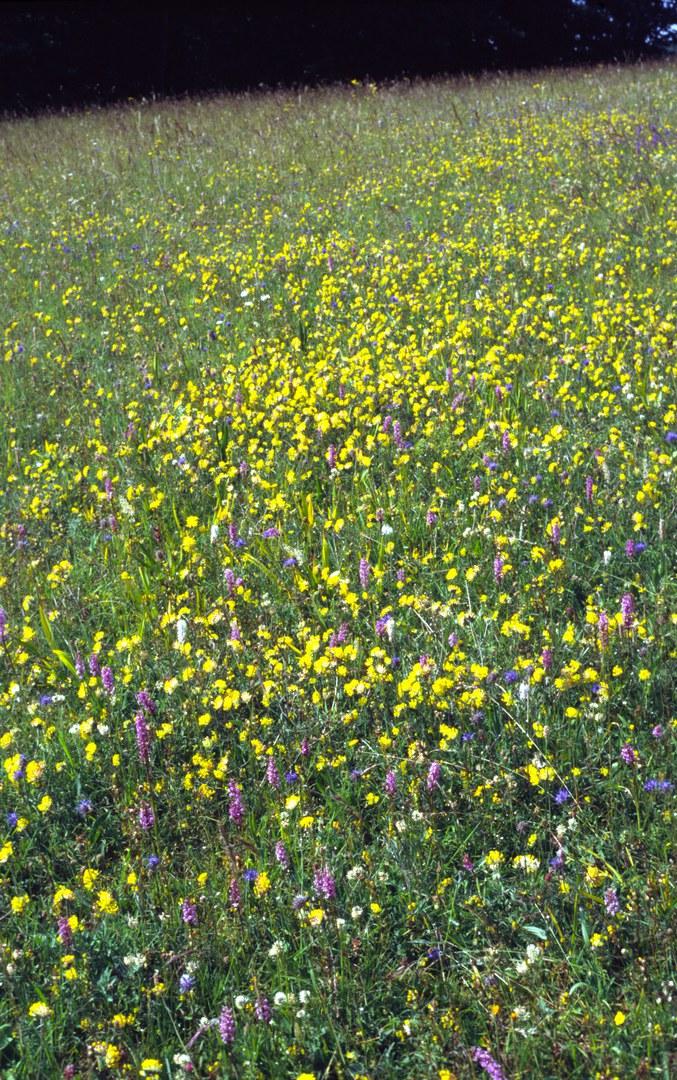 Bild Positivtrend:  Artenvielfalt in NRW steigt
