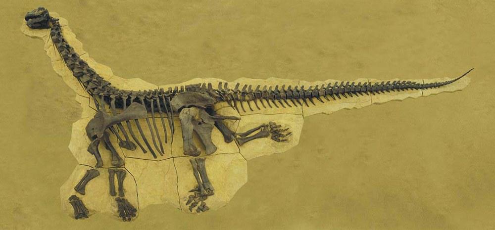 Bild Warum Riesendinosaurier so groß wurden