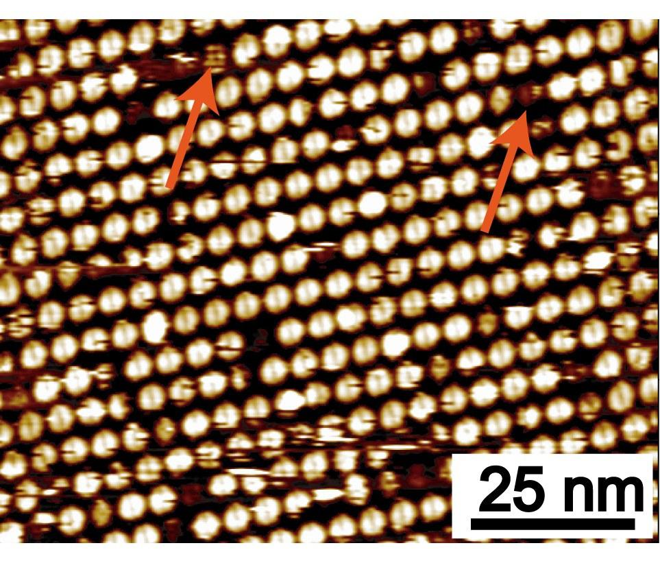 Bild der Adsorbierten Metallamakrocyclen.jpg