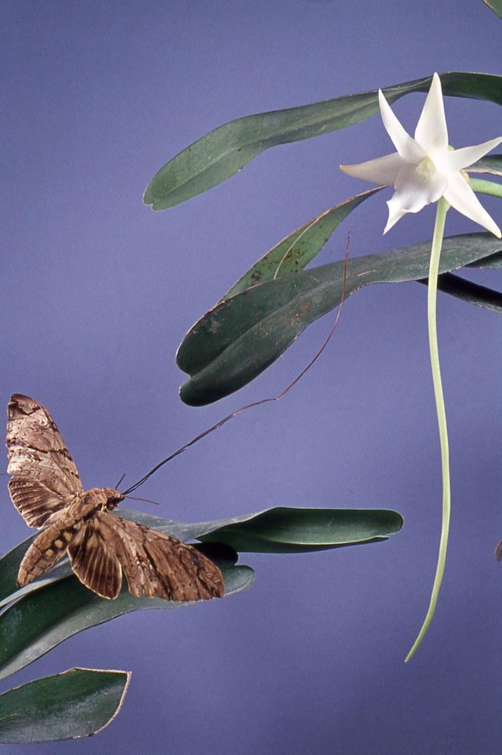 Bild Darwin und seine Blumen
