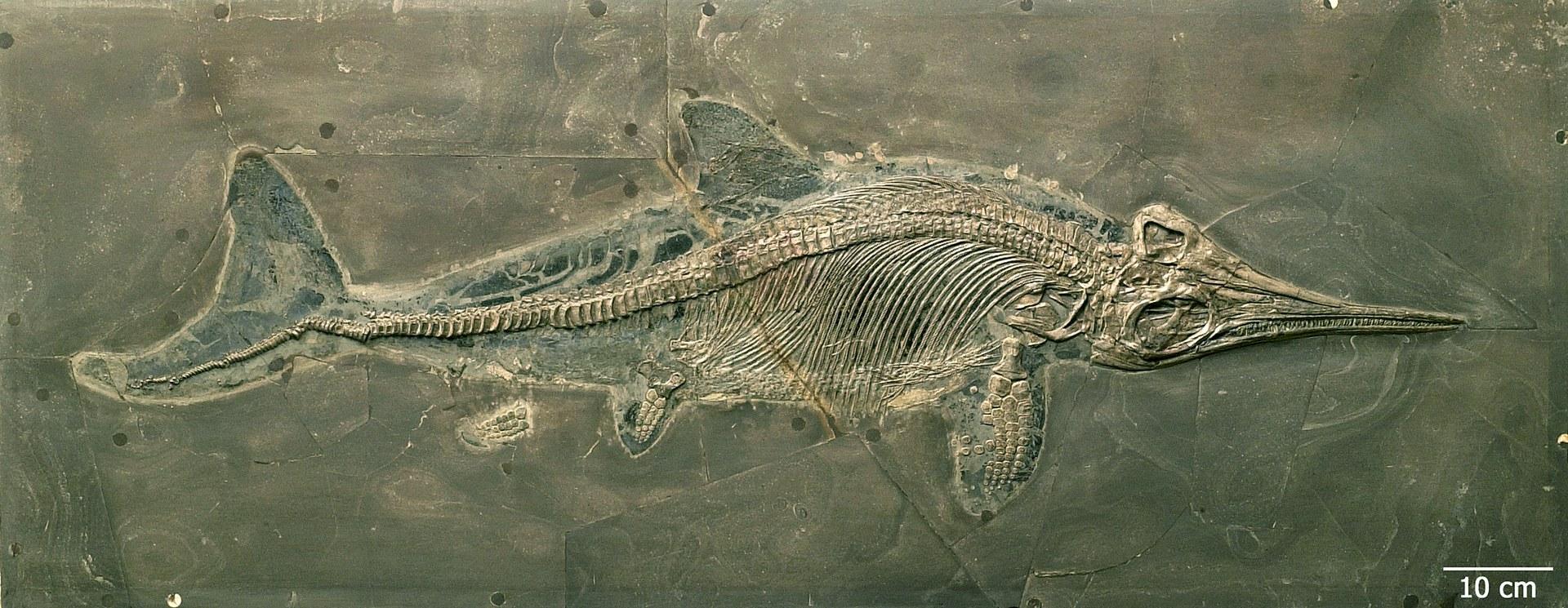 Fischsaurier.jpg