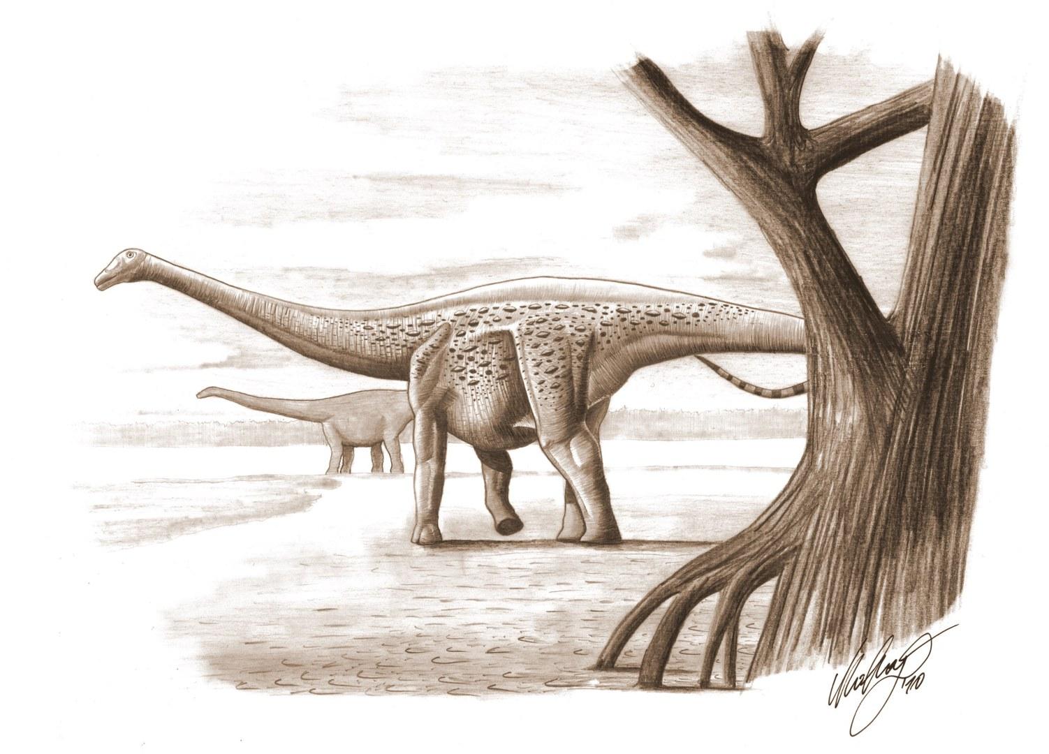 Magyarosaurus.jpg