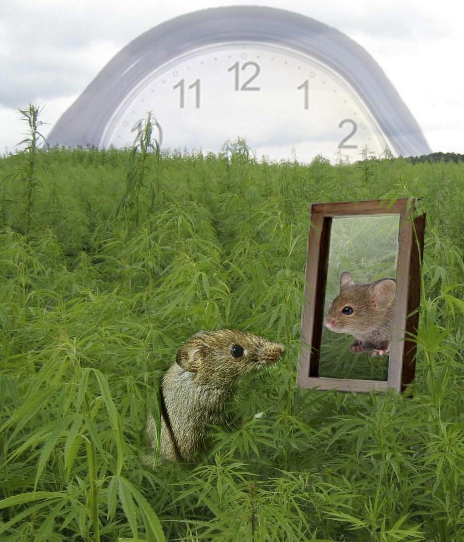 Die Uhr tickt: