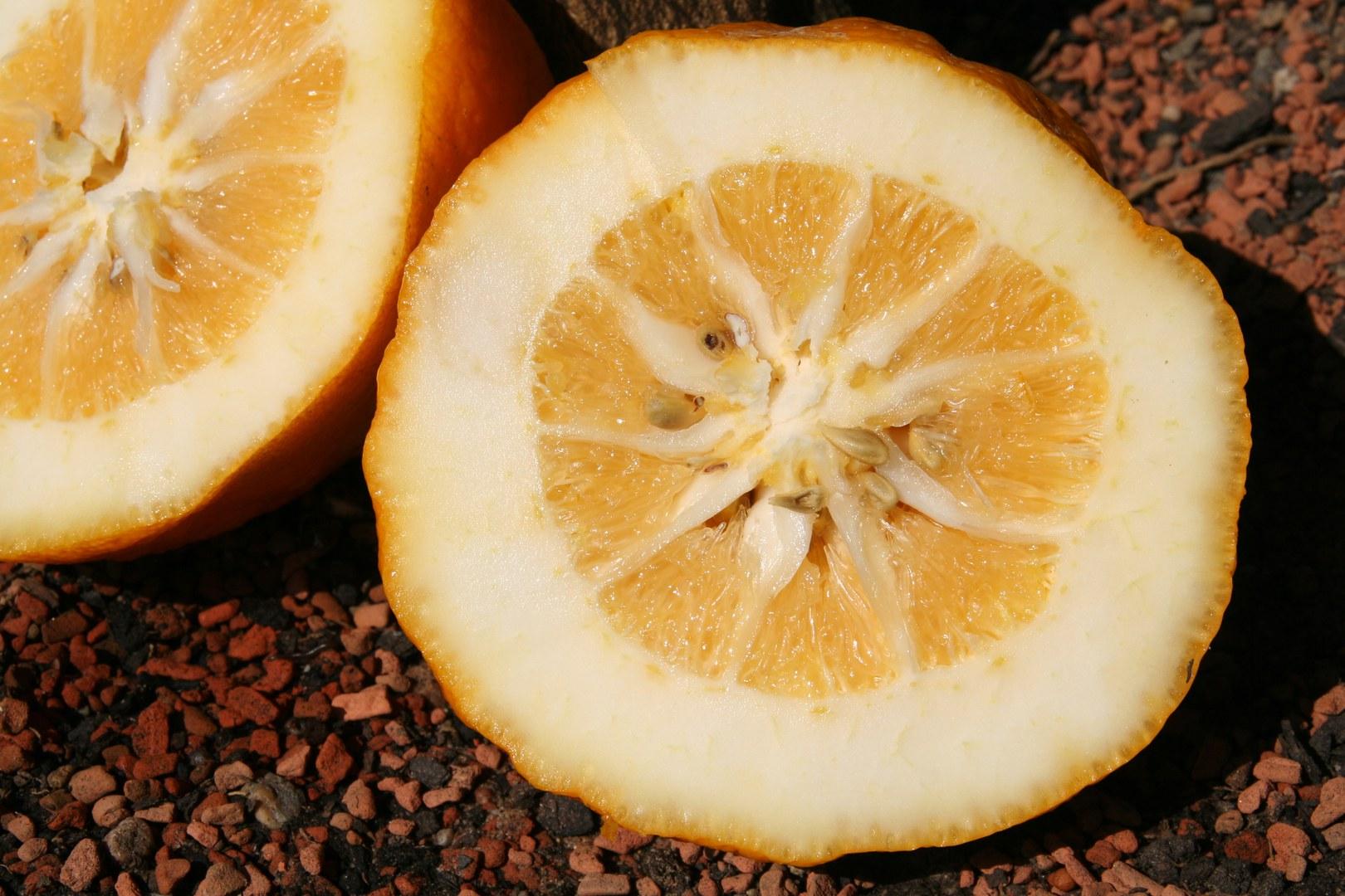 Citrus medica.jpg