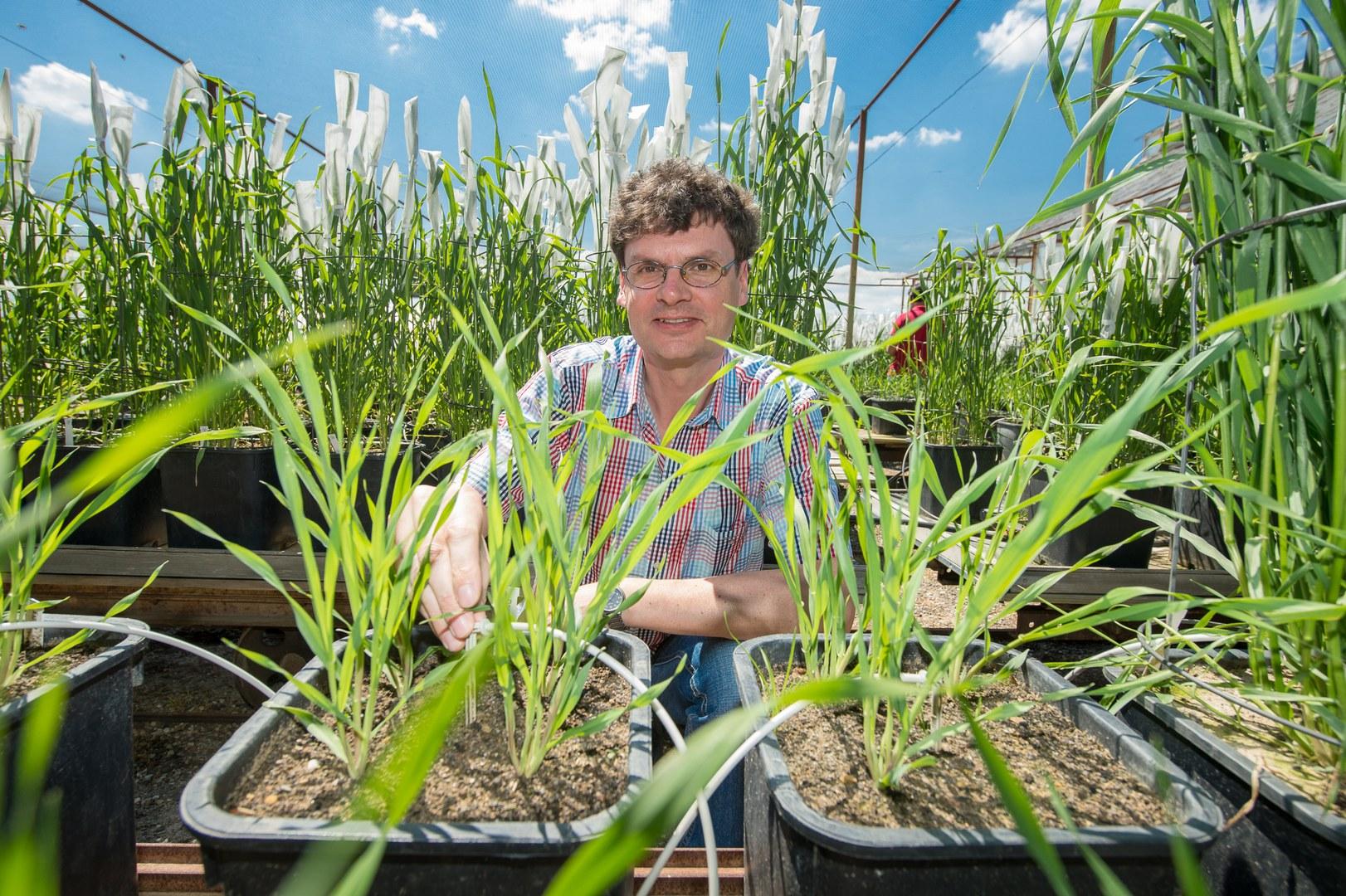 Dr. Stefan Siebert mit Gerstenpflanzen