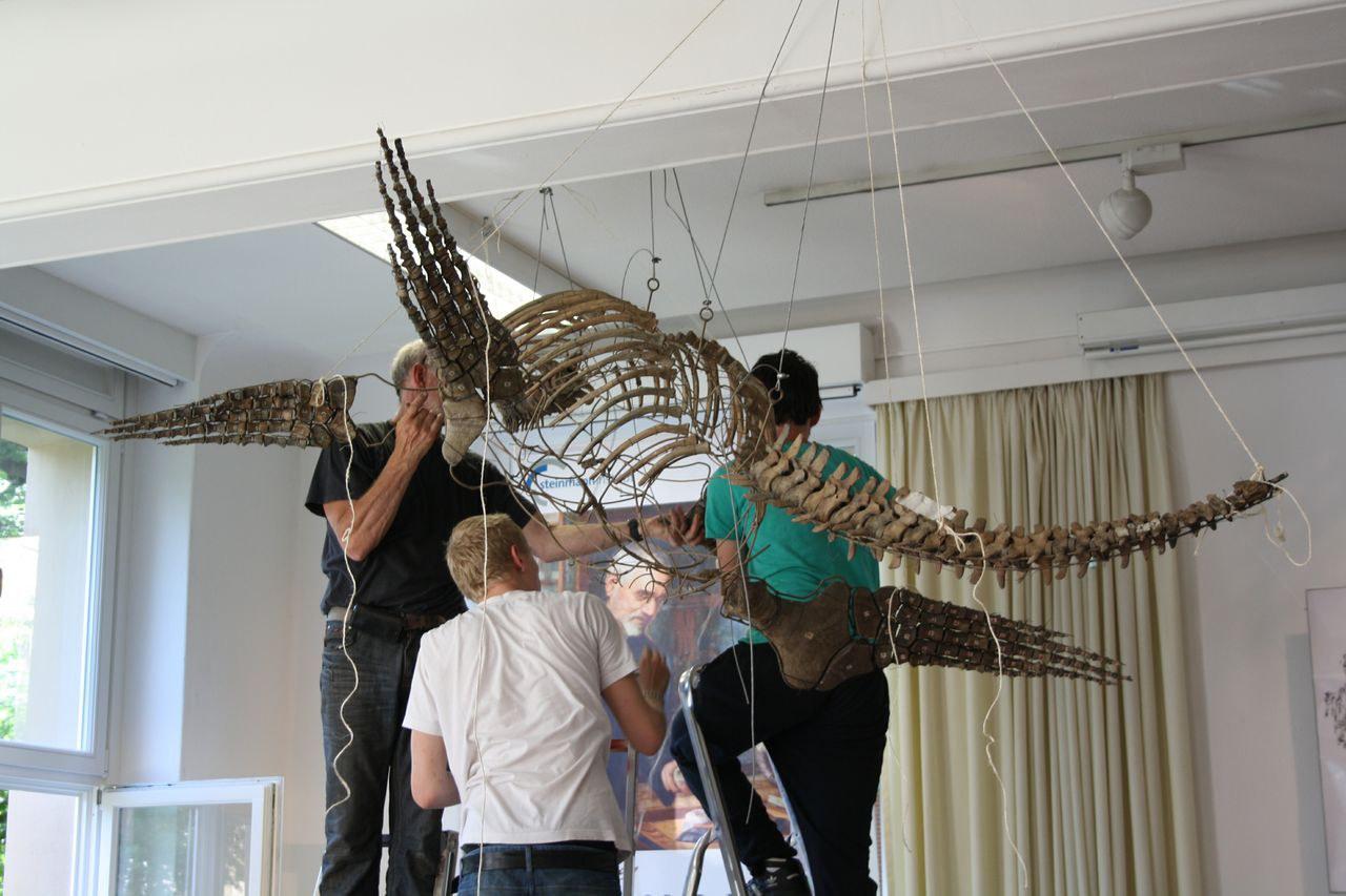 Skelett im Aufbau