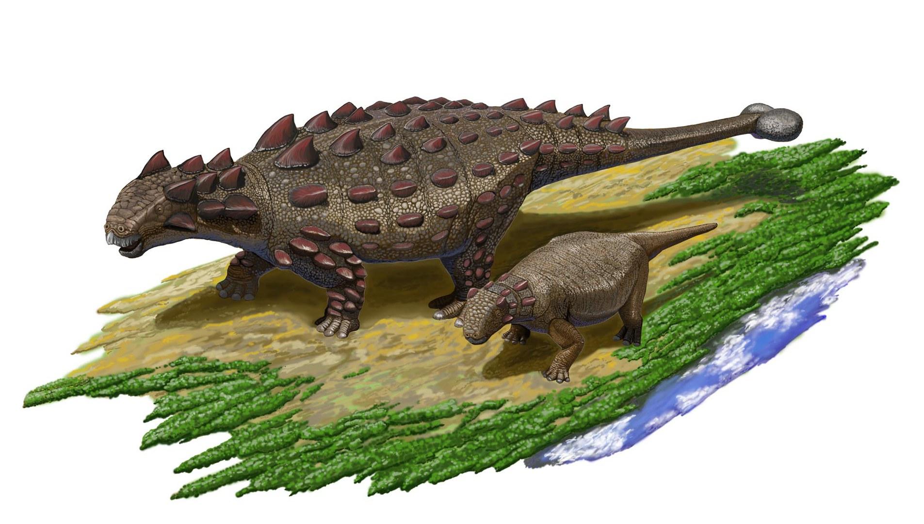 Die Rüstung erwachsener Ankylosaurier