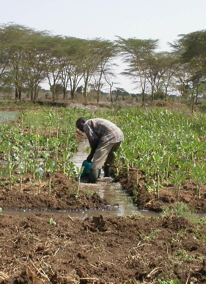 Ewaso Narok Sumpf in Kenia: