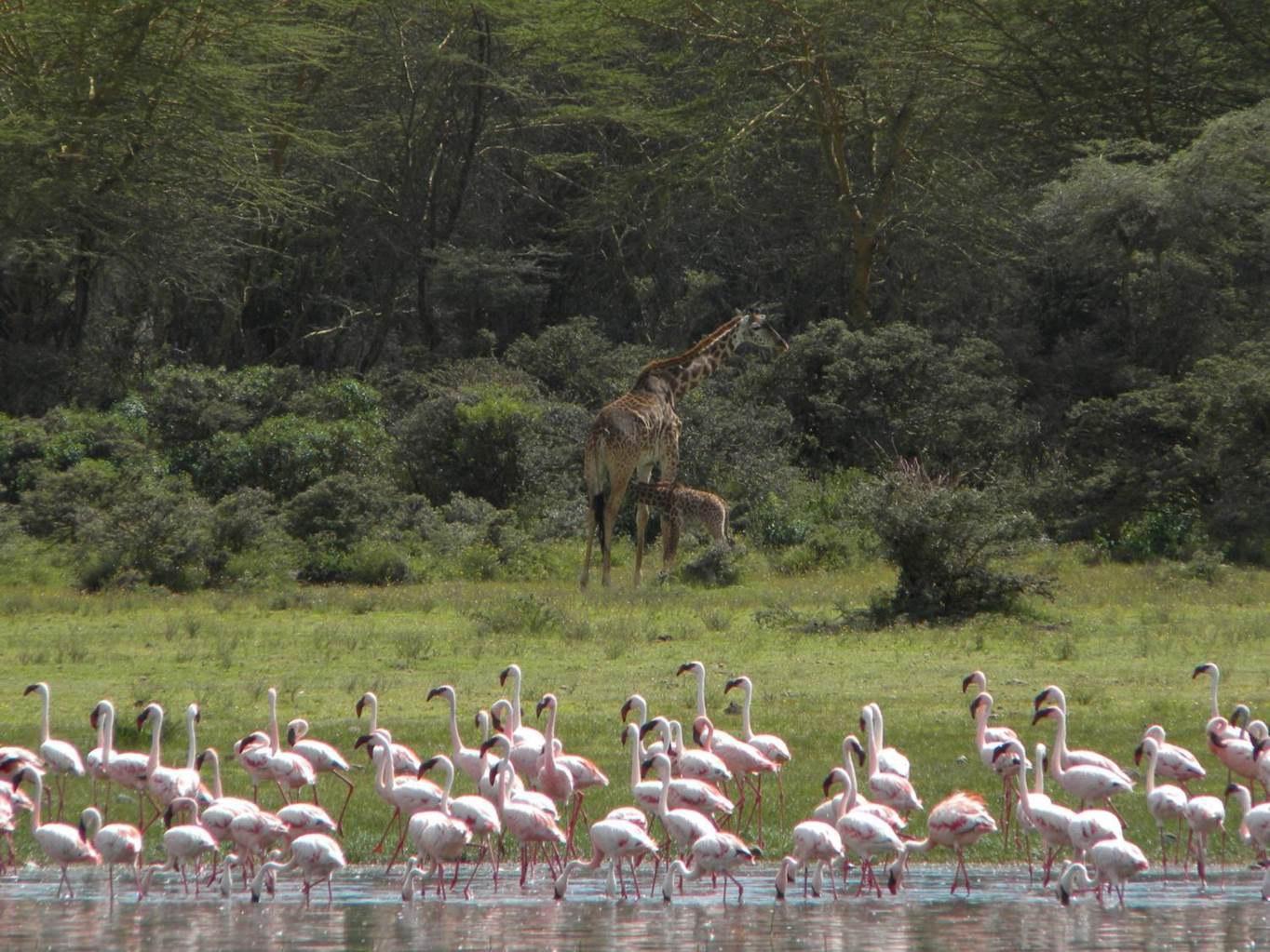 Naivasha-See in Kenia: