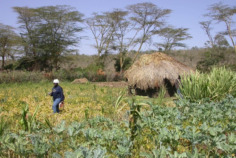 Pangani-Ebene in Tansania: