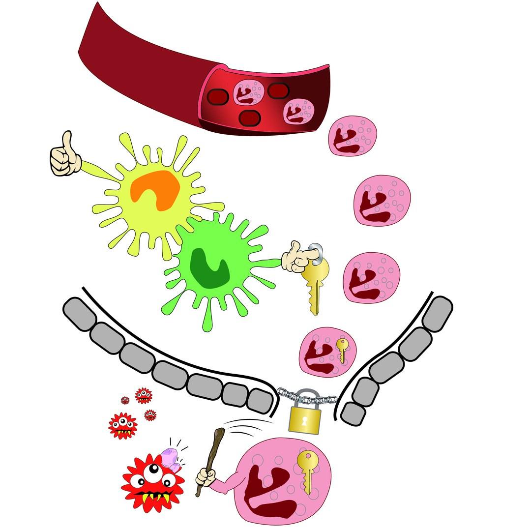 Immunwaffe mit eingebauter Sicherung: