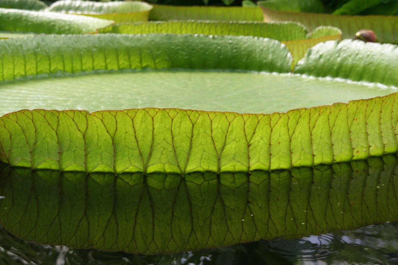 Schatzkammer Botanische Gärten