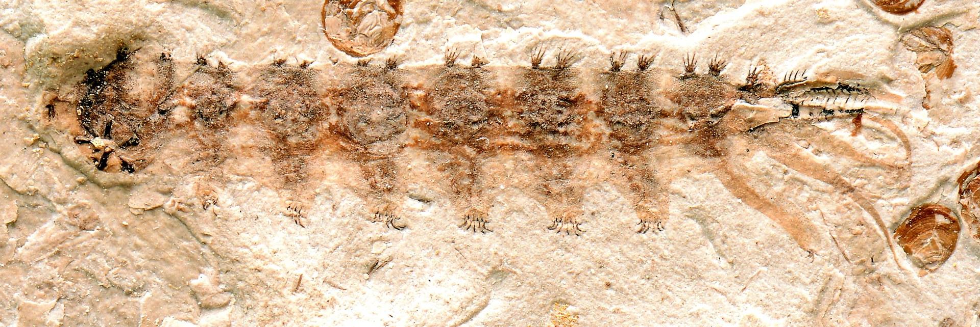 Das Fossil: