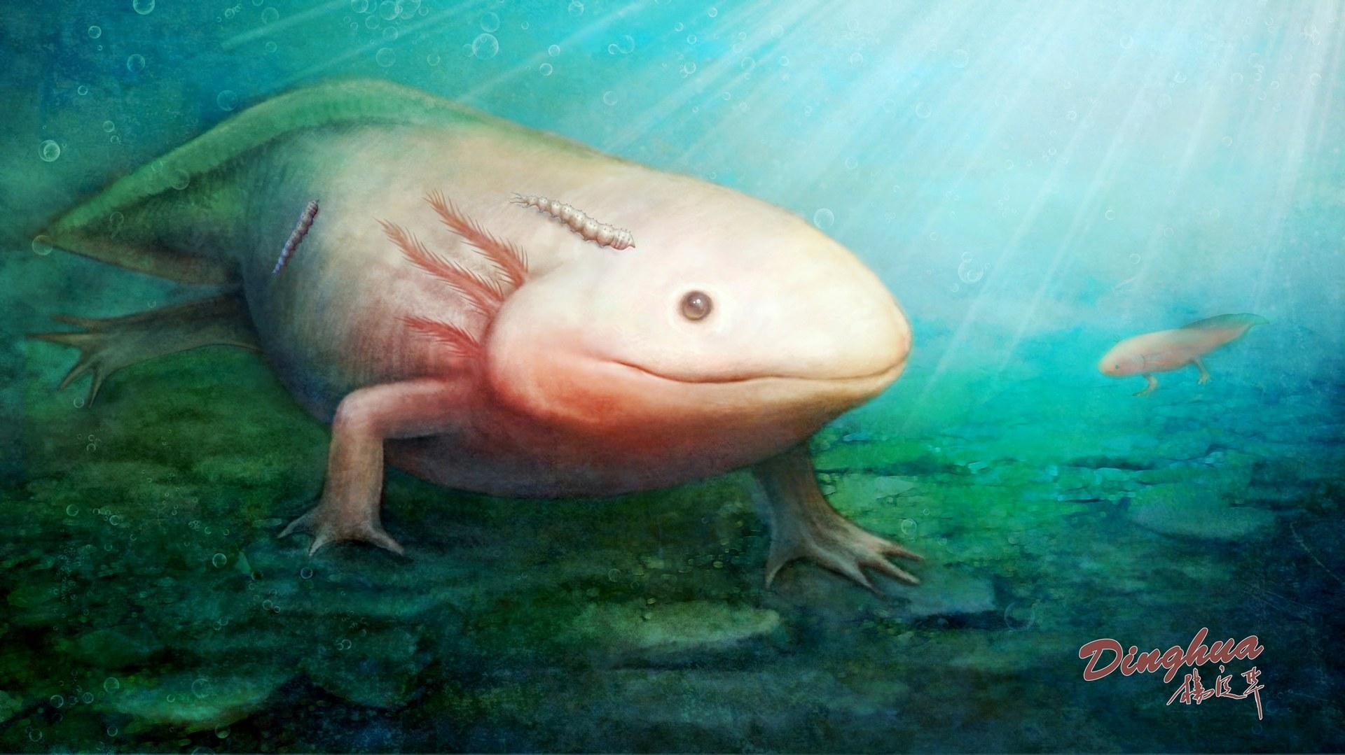 Salamander dienten als Wirt: