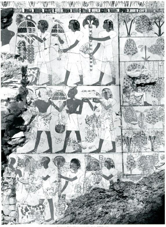 Zustand der Wand im Grab des Sobekhotep 1930