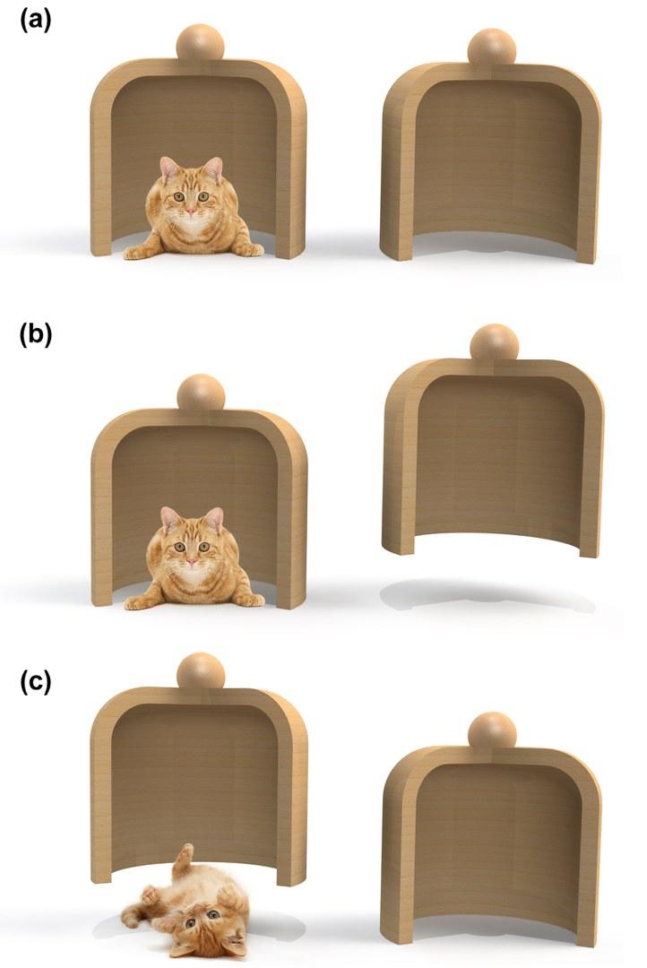 Alberti-cat-series.jpg