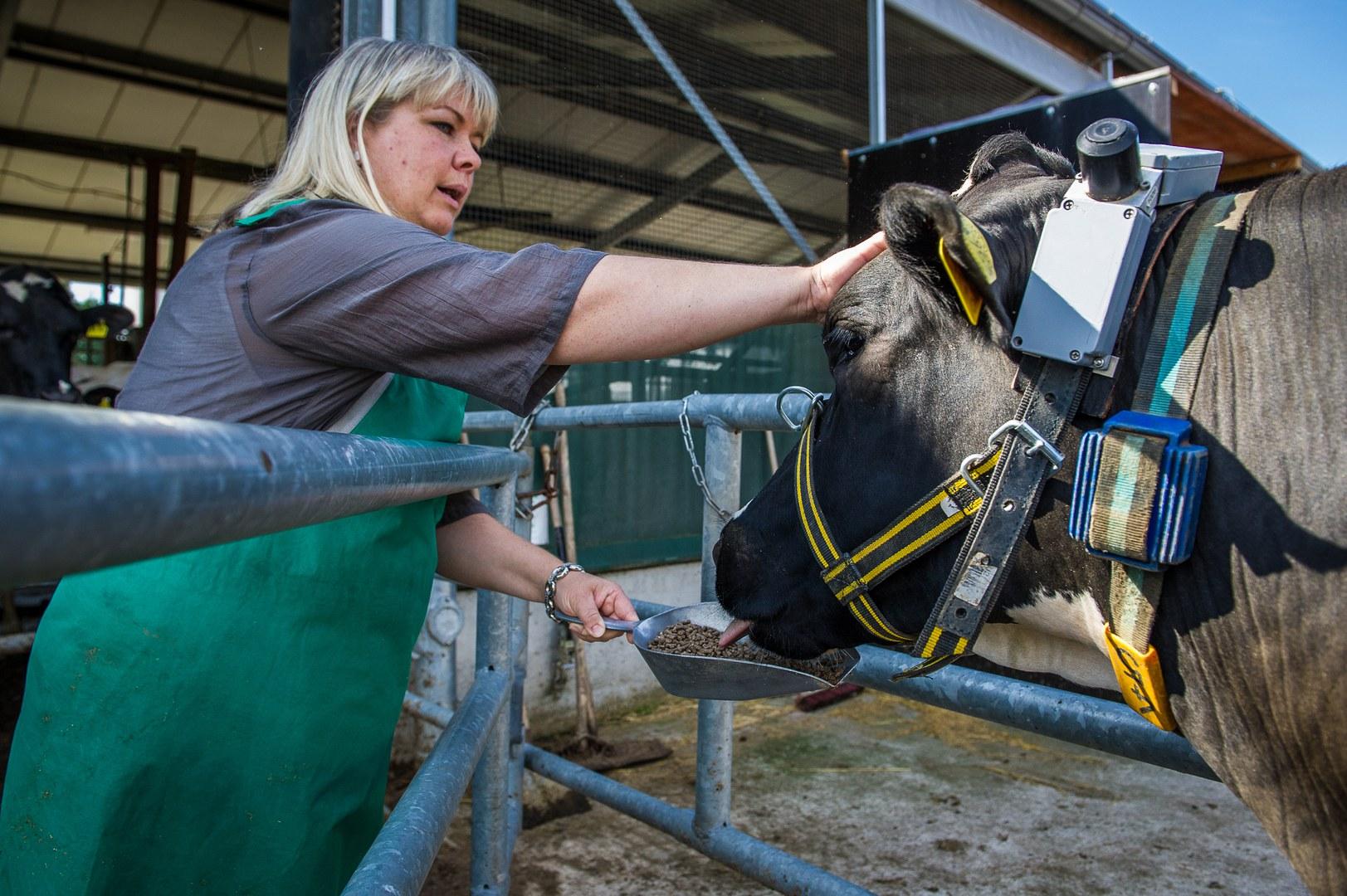 Tierärztin Dr. Susanne Plattes