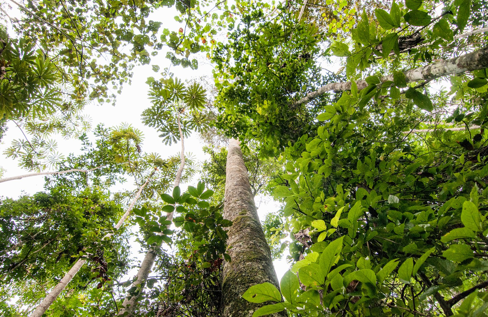 Rückläufige Abholzung im Regenwald.