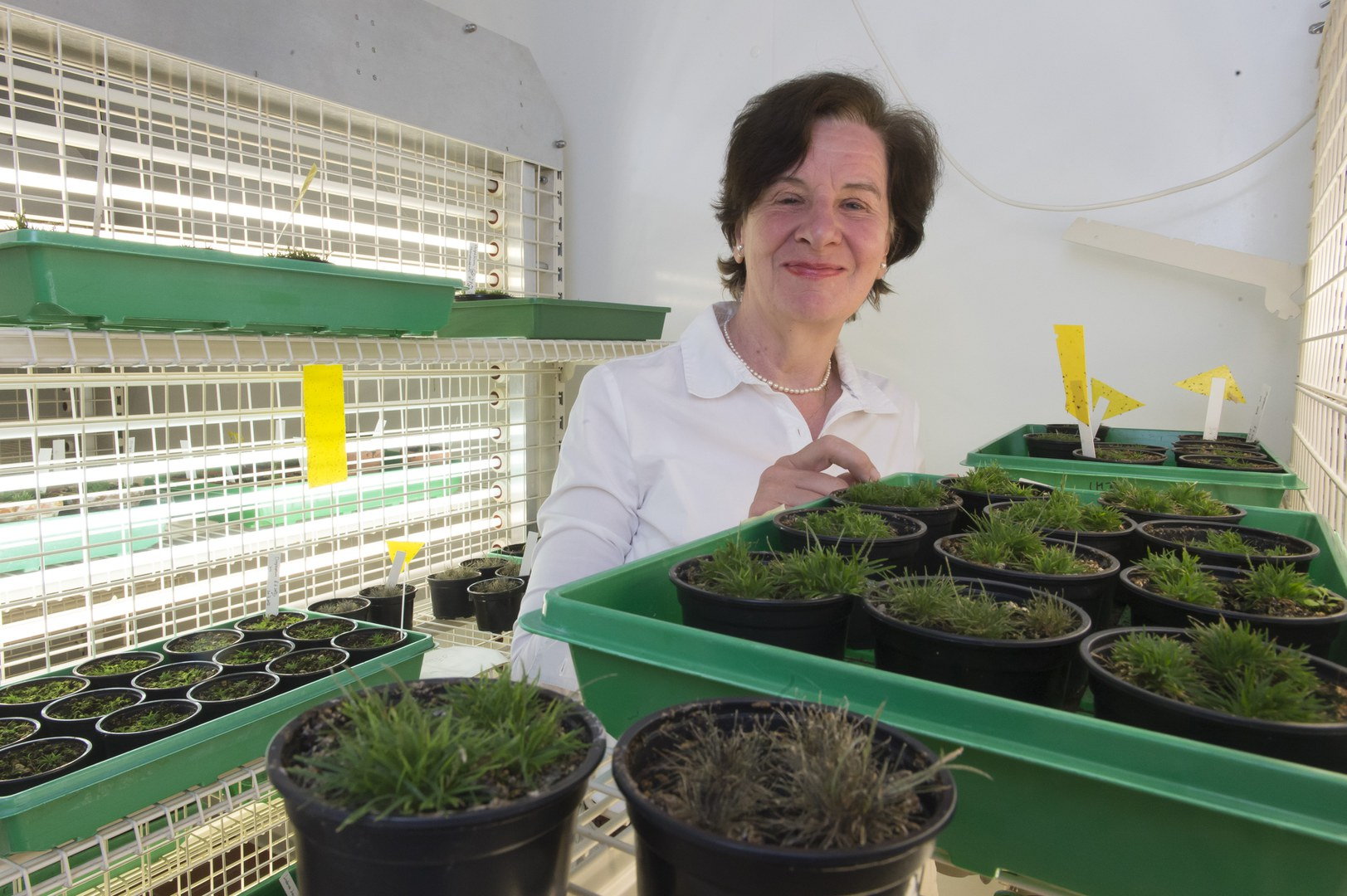 Prof. Dr. Dorothea Bartels