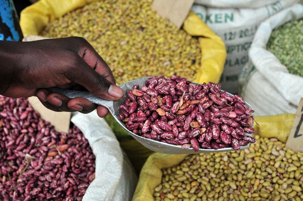 Bohnen sind im Afrika südlich der Sahara besonders vom Klimawandel betroffen:
