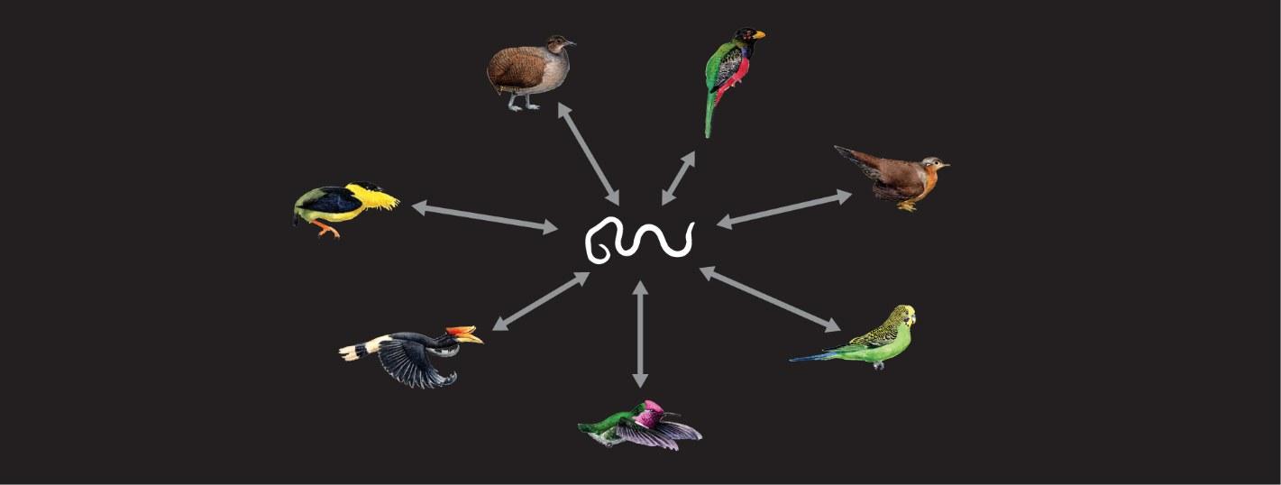 Die Forscher fanden in sieben Vogelgruppen
