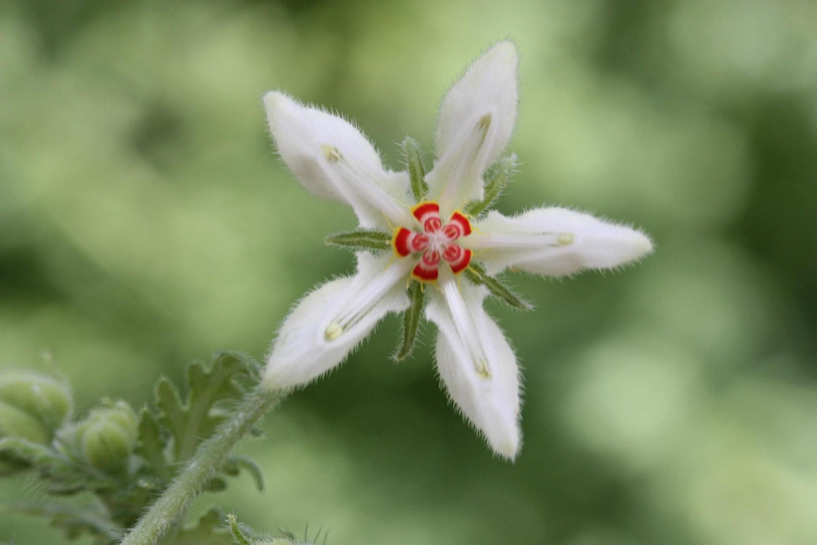Vielfarbige Blüte