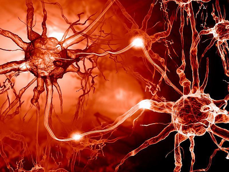 Symbolfoto Neurowissenschaft