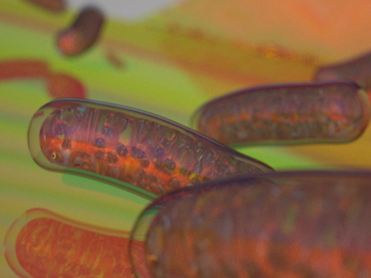 Mitochondrien (rot) sind die Kraftwerke der Zelle.