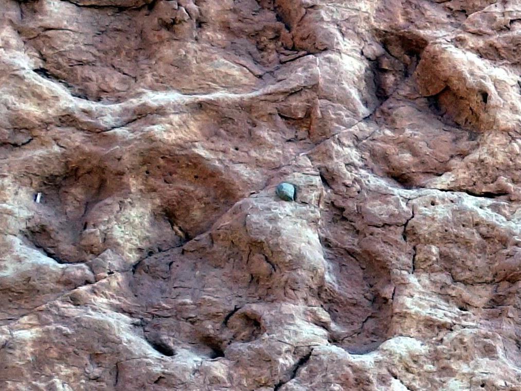 Gut erhaltene Fußspuren der Fundstelle in Marokko,