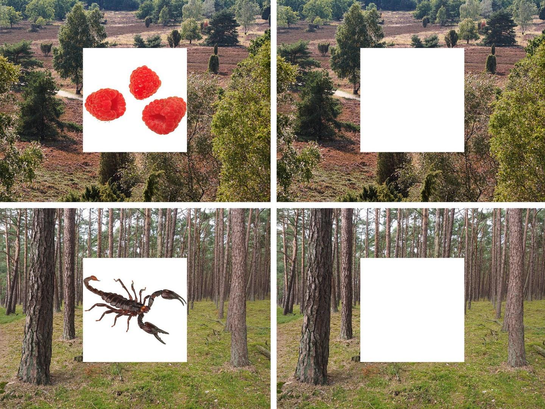 Die Versuchsteilnehmer sahen zunächst Bilder einer Landschaft,