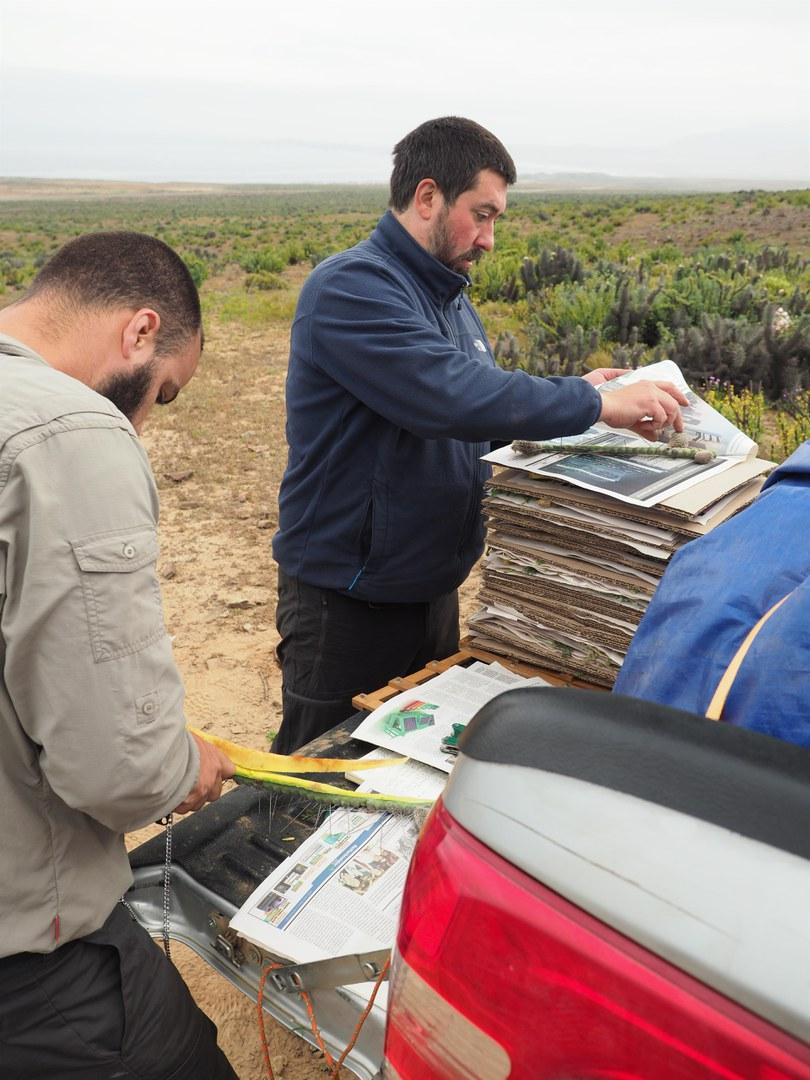 Gesammelte Pflanzen werden vor Ort präpariert und gepresst