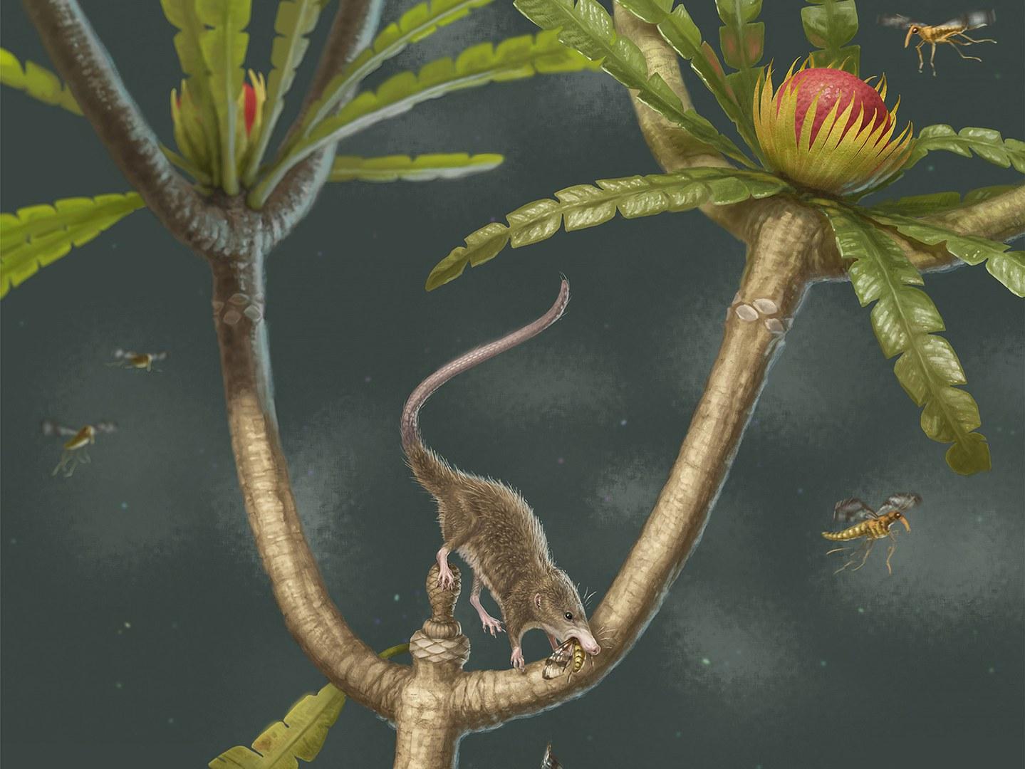 Microdocodon gracilis lebte vor mehr als 160 Millionen Jahren.