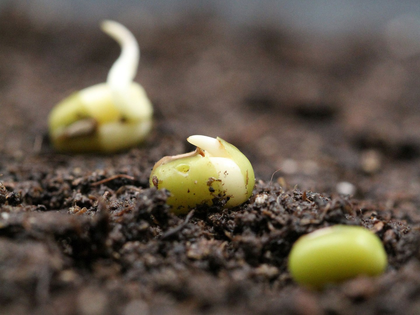 Bild1-Mung-bean-seeds_by-Bettina-Richter-3x4.jpg
