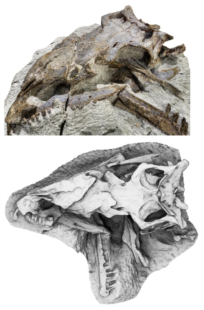 Photo (top) and 3D model (bottom, top view)