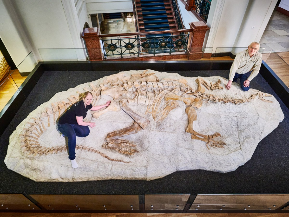 Fossil of a Plateosaurus trossingensis,